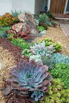 Amazing Image Succulent Landscaping Succulent Landscaping Incredible Low Water Landscaping Ideas For Your Garden 36 Low Water Landscaping, Succulent Landscaping, Succulent Gardening, Cacti And Succulents, Front Yard Landscaping, Planting Succulents, Landscaping Ideas, Organic Gardening, Gardening Tips