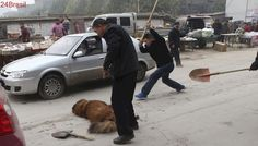 Milhares de cães são abandonados depois de serem explorados por fábricas de filhotes