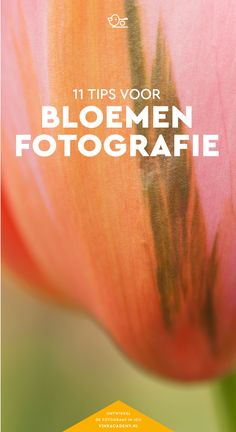 Fotografie tips bloemen: 11 tips voor de mooiste bloemenfotografie. NIet alleen maar tips voor macro foto's, maar ook hoe je met andere lenzen de bloemen goed fotografeert. Plus fototips over de instellingen en je standpunt.