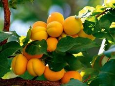 Portable Farms: How to Grow Fruit Trees or Blueberries in Aquaponics