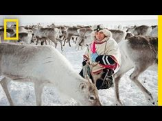 These shows deal with Norwegian natives and how they raise, herd and use their reindeer, which is the basis of their economy.