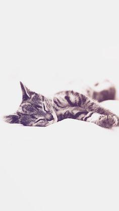 1000 Images About Animal On Pinterest Animal Logo