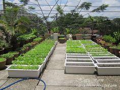 sân thương Plastic Planter, Planters, Garden, Garten, Lawn And Garden, Plants, Gardening, Outdoor, Gardens