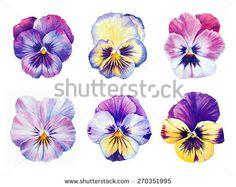 Watercolor Cards, Watercolor Flowers, Watercolor Paintings, Watercolor Drawing, Watercolours, Pansy Tattoo, Flower Tattoos, Botanical Art, Botanical Illustration