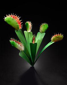 Glass Venus Fly Traps made by Jason Gamrath