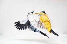 Great tit & great grey shrike. Paper sculptures by Diana Beltran