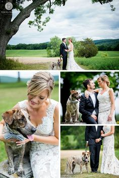 Wedding photography with dogs in Saratoga Springs, NY   wedding dog with bride and groom