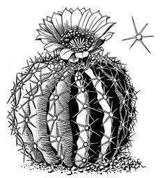 Cactus Drawing, Cactus Painting, Watercolor Cactus, Plant Drawing, Cactus Art, Kaktus Illustration, Desert Drawing, Botanical Line Drawing, Flower Outline