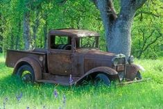 Vintage Car Models Photographic Print: A Rusting 1931 Ford Pickup Truck Sitting in a Field under an Oak Tree by John Alves : - size: Photographic Print: A Rusting 1931 Ford Pickup Truck Sitting in a Field under an Oak Tree by John Alves : Ford Classic Cars, Classic Chevy Trucks, Ford Ranger, Customised Trucks, Custom Trucks, Automobile, Old Pickup Trucks, Farm Trucks, Old Ford Trucks