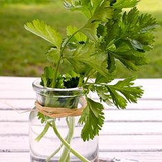 Hydrate your herbs: Spring cleaning can help you drop the pounds and keep them off. | Health.com