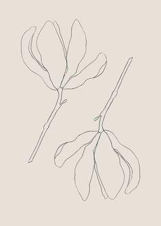 Pink magnolia duet study by tristan b. - Pink magnolia duet study by tristan b. Floral Illustrations, Botanical Illustration, Botanical Art, Illustration Art, Magnolia, Art Graphique, Line Drawing, Line Art, Art Drawings