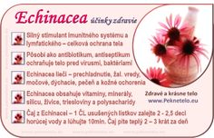 Info Echinacea