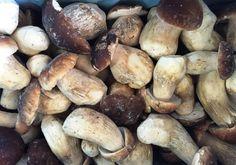 Boletus edulis congelati, Aleramica Funghi srl