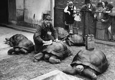 Почтовые черепахи во дворе почтового отделения в Лондоне