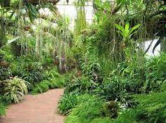 Bilderesultat for tropical plants