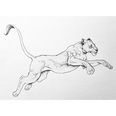 """162 Likes, 7 Comments - LYdia FEnwick (@lyfeillustration) on Instagram: """"Lioness tattoo commission #rawr"""""""