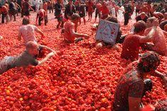Un grupo grande se divierten mucho con mucho tomates