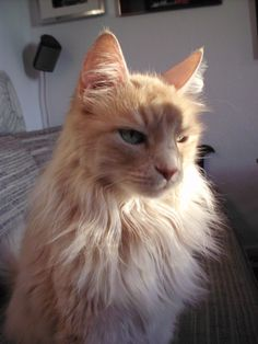 Look at this lion cat!!