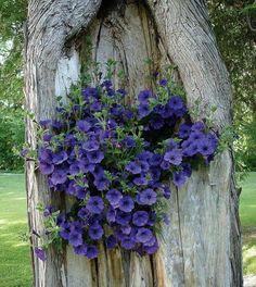 Blommor i träd