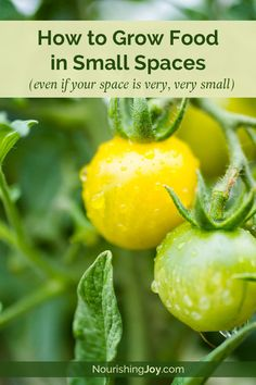 How to Grow Food in Small Spaces: 8 Tips That Work (Even if Your Space is Very, Very Small)