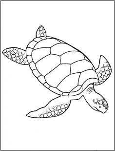 turtle coloring pages to print