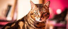 Mag je een kat eigenlijk wel aankijken of is dat een bedreiging? Zoals bij alles wat met gedrag te maken heeft, ligt ook dit genuanceerd.