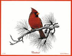 Bird Pencil Drawing, Bird Drawings, Pencil Drawings, Cardinal Drawing, Cardinal Paintings, Bird Paintings, Acrylic Paintings, Drawing Projects, Drawing Ideas