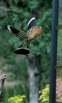 Vous mangez tranquillement quand soudain un oiseau s'écrase violament sur la vitre et repart en zigzaguent .