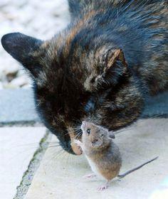 cat head - Google-haku