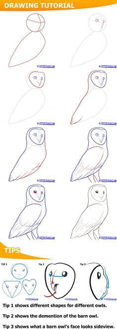 Comment dessiner une Chouette effraie 2848 comment dessiner