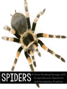 """Spiders Close Reading Practice"" is a nonfiction passage about spiders that was designed to help your students practice purposeful close reading. This packet was created to be used with first grade students. Teachers can use this passage as whole group, small group, or independent activities.Included in this Download:-One nonfiction reading passage about spiders-One page of comprehension questions related to the reading passage-One page of vocabulary practice (introduces three new…"