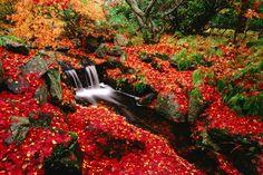 Red Carpet Forest outside of Osaka, Japan