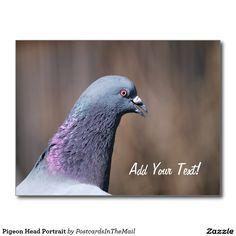 Pigeon Head Portrait Postcard