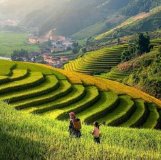 Terraced fields are a specialty for the mountains of Vietnam. It is the life time chance for visitors to see these fields on the corp. Visit Vietnam, Vietnam Tours, Vietnam Travel, Asia Travel, Hanoi, Buddhist Pagoda, France, Ho Chi Minh City, Amazing Nature