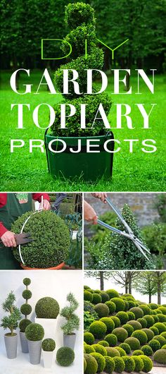 DIY Garden Topiary Projects! • Yes, you can do this yourself and the look can be contemporary and modern in your garden as well! Great tips, ideas and projects!
