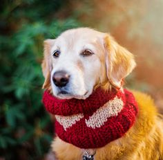 Valentine Free Knitting Pattern, for your Furry Valentine. Knitting a cute cowl for your dog with hearts is a fun way to celebrate Valentine's Day. | Pattymac Knits