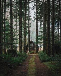 Cabins And Cottages: Relax in the woods. Cabin In The Woods, Into The Woods, Cottage In The Woods, Cabin Homes, Log Homes, Little Cabin, Cabins And Cottages, Log Cabins, Dream Big