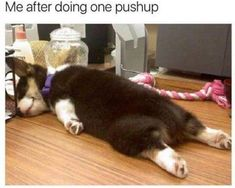 Funny Dog Pictures Dump of the Day - 12 #FunnyDog #funnydogs