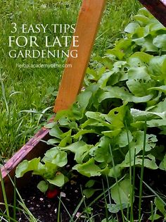3 Easy Tips for LATE Gardening