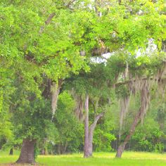 Covington, Louisiana How beautiful is this?!!!