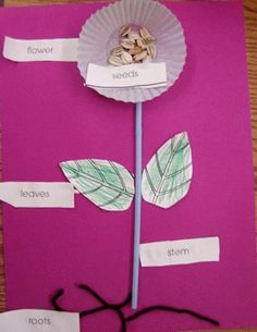 Another cute plant craft with a cupcake liner as the flower! #Recipes