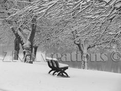 SNOWY SERENITY - 8x10 Black and White Photograph - Winter Snow Scene with Water and Park Bench and Snowy Branches