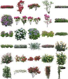 Free PSD Designs & Vectors | Flowers PSD of Furukawa