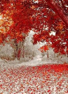 Only in Minnesota can you get scenes like this, a blend of autumn and winter. First snowfall in Duluth, Mn.