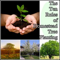 The Ten Rules of Homestead Tree Planting Homesteading  - The Homestead Survival .Com