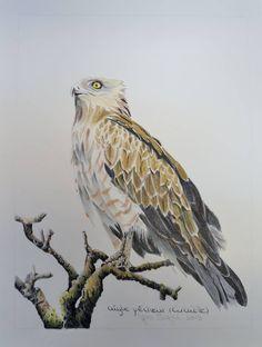 Crayon de couleur Owl, Bird, Animals, Color Pencil Picture, Drawings, Animales, Animaux, Owls, Birds