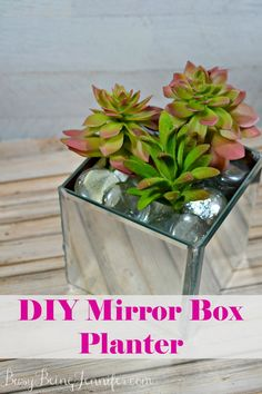 A DIY mirror planter box (or a 12) would look great lined up on a mantle or as a centerpiece on a table! These are definitely great for Holiday decor ideas!