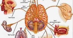 J'ai lu un article hier qui m'a vraiment passionné du fait de toutes ses implications. L'article est intitulé « Hackez le système nerveux », par Gaia Vince (http://mosaicscience.com/story/hacking-nervous-system). Dans l'article, l'auteur décrit l'expérience d'une femme qui souffrait d'une grave arthrite rhumatoïde handicapante et le traitement qu'elle envisageait à l'aide d'un dispositif qui réduit au minimum l'inflammation en … lire la suite / http://www.sport-nutrition2015.blogspot.com
