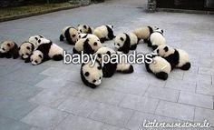 Baby Pandas <3
