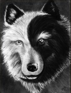 Old Cherokee Proverb ~Inside everyone is two wolves fighting, one is greed, hatred, and jealousy. The other is joy, happiness, and love. The wolf that wins is the one you feed.